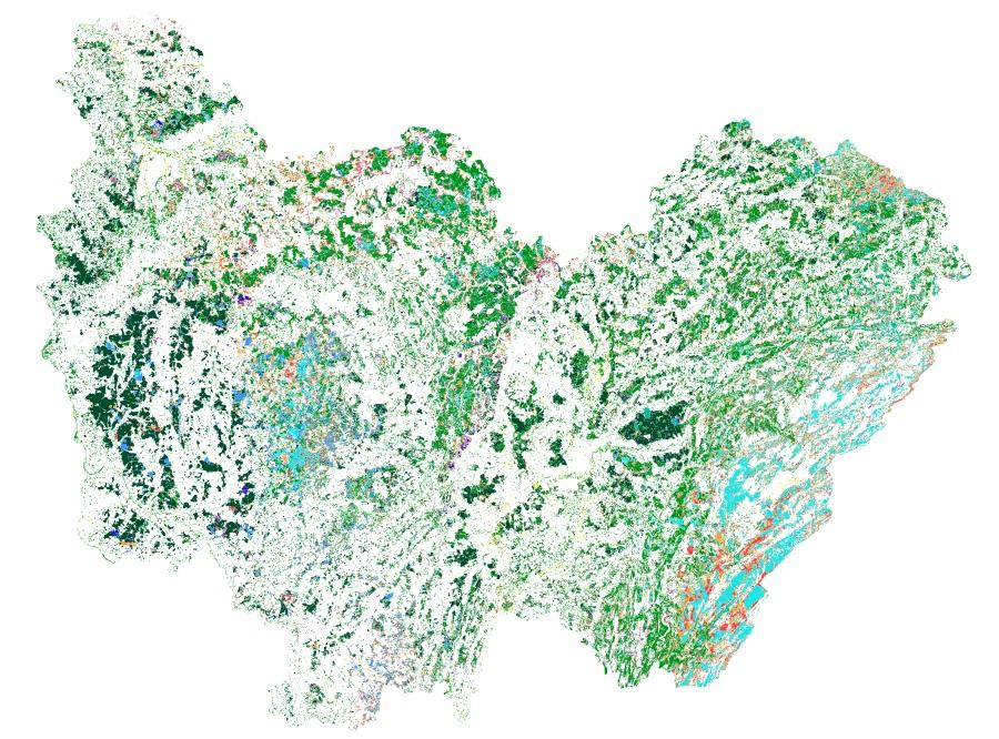 Base de données Forêt IGN